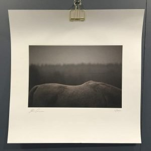 Kajsa Cramer White Horse Juliste 45x45 Cm